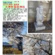 花巡り 「桜-その494」 三神町稲荷神社 古河七福神  福禄寿