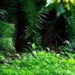南の島の野鳥写真展開催・・・(8日目)