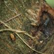 一本の木で仲良く?食事 コムラサキ/クロコノマチョウ/ミヤマクワガタ・・・