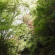 新緑が美しい 「奥飛鳥の春」