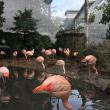 エジンバラの動物園 その1 動物が近距離!