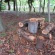 樹林地作業(0913)