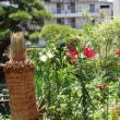 庭に綺麗な花が