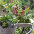 サキュレント(多肉植物)の楽しみ