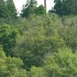賢治記念館周辺の森も悲鳴を上げている