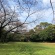 城跡の桜の開花状況