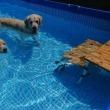 プールミーティング