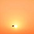 太陽と鳥のコラボ
