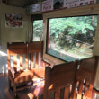 嵯峨野トロッコ列車の中でチューリップの青春の影