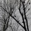 鳥たち・・・