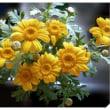 毎年立派になっていく花