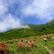 花いっぱいの野反湖ノルディックウォーキング♪(^_^)