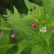 小さい花たち