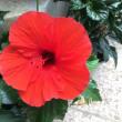 父、竹中皆二の短歌から  〜赤い花、アイノカゼ〜竹中敬一