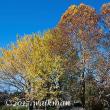 右も左も、秋の彩り。