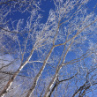 2018/01 真冬の赤城山 ~雪の華(レベル1)~
