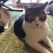台風接近、家で猫とまったりの休日【猫日記こむぎ&だいず】2017 10 21