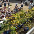 バケツ稲の田植え