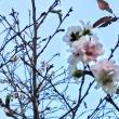 十月桜と秋薔薇