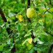 キク科の植物(赤塚植物園)