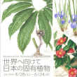 日本の固有植物 ボタニカルアート展