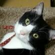 初めての猫ライフ =ハンスト&粗相=