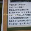 霞ヶ浦総合公園の紅(黄)葉