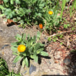 雨をもらい成長 小さな花たち!