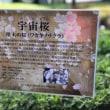 黄川田将也!総理大臣主催『桜を見る会』2018!お招き頂きました!