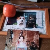 秋分の日にクウは昨年死んだ嫁さんの所に逝った。さようなら!