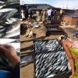 超人気サバをアフリカへ大量輸出するワケ