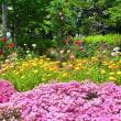 明るくカラフルに 守山の薔薇、ハーブ園