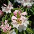 我が家の庭の元気な花たち