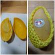 A first Mango