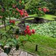 小石川後楽園の睡蓮