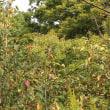 10月色づきはじめた木々