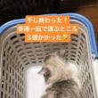 猫と漬物の日
