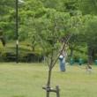 於大公園の花 : サラサウツギ ・・・ 今日はポケモンサンデー、いつもの場所に集合です。