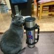 水筒を買いました。
