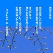 青空と冬芽