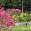 花が全部咲いて 桃、藤、山吹、、、なんなの?