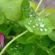 白装束の忍者ワンコ、シバワンコ、タップリスギ花粉