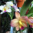 こんなにも色が違う           最近咲いた花を追加しておきます。