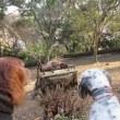 さらに新たな犬のオブジェ