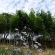 白野江植物公園の秋