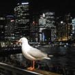 オーストラリア シドニー1日目