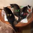猫とピザの日