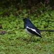台北探鳥旅行 2日目 植物園