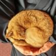 トラ猫アンモナイト