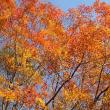 11/11(土)のイキメンニュース~暮らし&身近な法律・判例の情報
